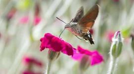 如此严重的生物多样性丧失后,生态系统能否从野火中恢复?