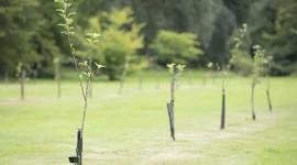 Cómo hacer espacio para 2 mil millones de árboles en una isla abarrotada como el Reino Unido