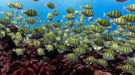 Marine hittegolwe spel probleme vir tropiese rifvisse - selfs voordat korale sterf