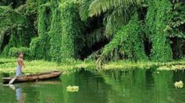 パナマ人は国連の森林計画を拒否する