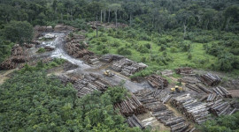 Rainforest And Reef Systems Face Collapse