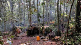 Tropical Forests May Be Heating Earth By 2035